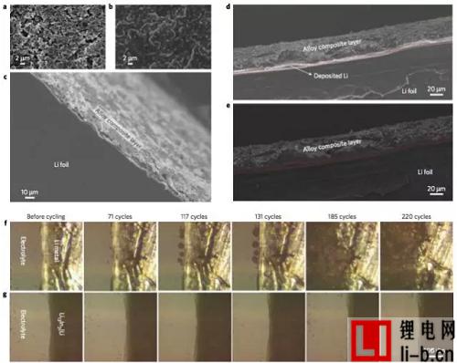 图1. 合金保护锂金属的扫描电子显微镜和光学显微镜图像研究。